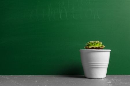 Thank your teacher with a plant. Image of a potted plant.